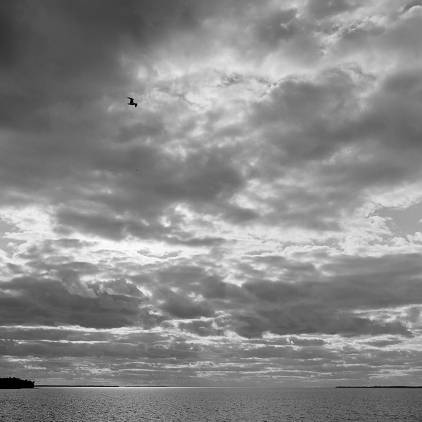 Clouds and Gull, Sackets Harbor, NY. September 2001