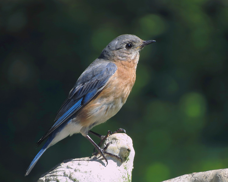 sx40_newgirl_bluebird_boas_106.jpg