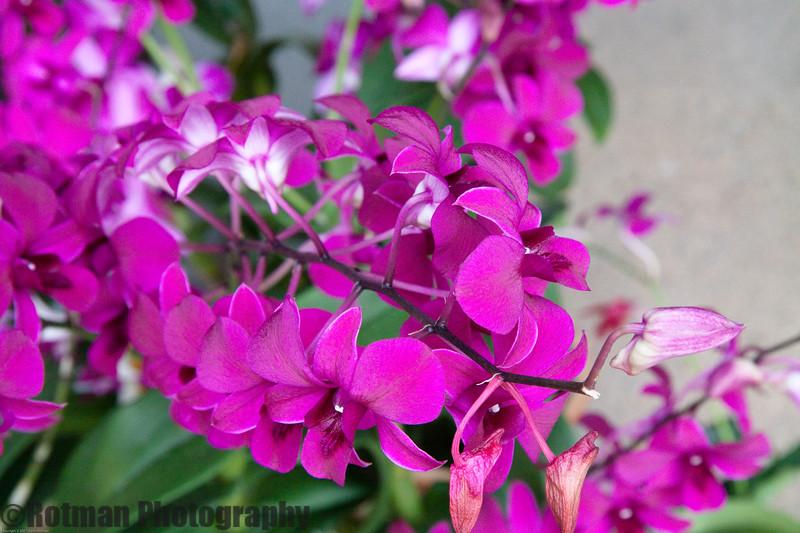 Singapore gardens-4737.jpg