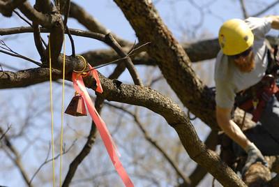 2006 MACISA Tree Climbing Championship