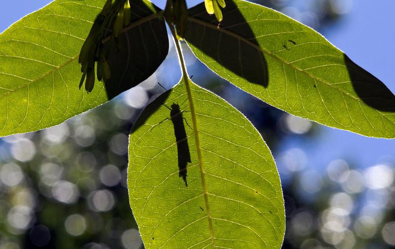 butterfly shadow.jpg