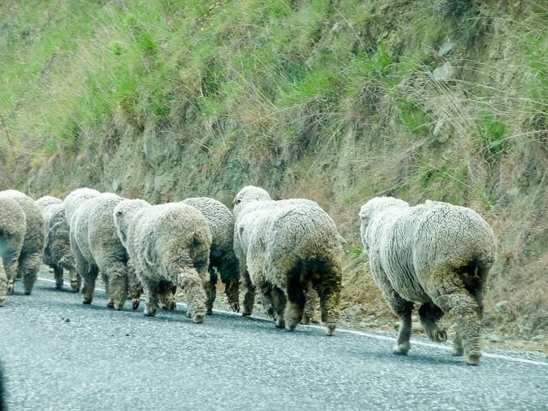 New Zealand - Queenstown