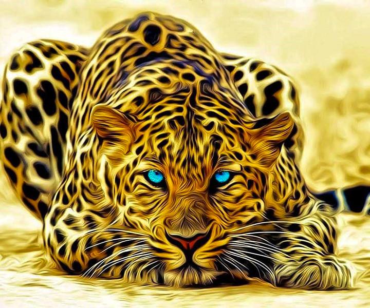 blue eyed Jag kitty.jpg