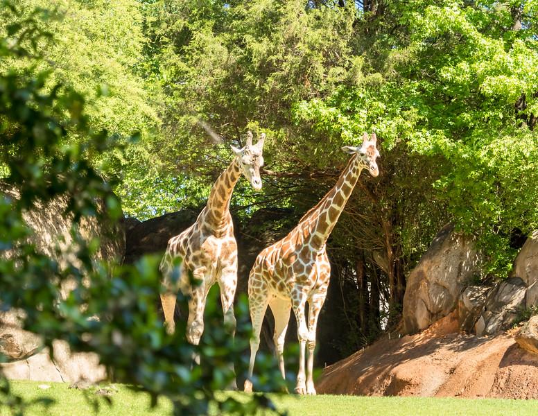 78 Apr 23 Asheboro Zoo  (1 of 1).jpg