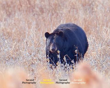 12-28-16 Bear n friends