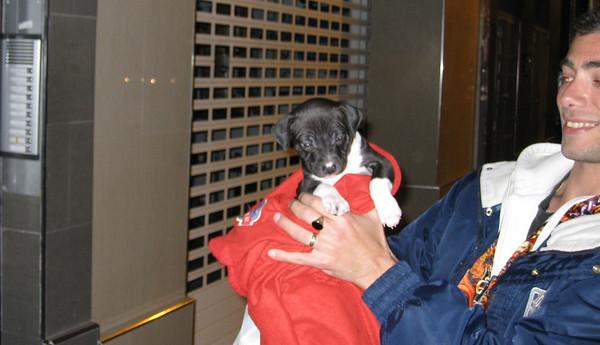SADE (new puppy pit girl)