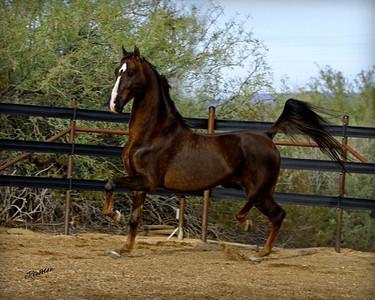 Desert Oasis Ranch