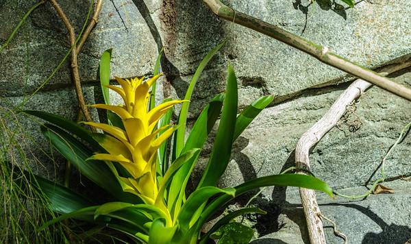 Botanic Gardens 1.30.16