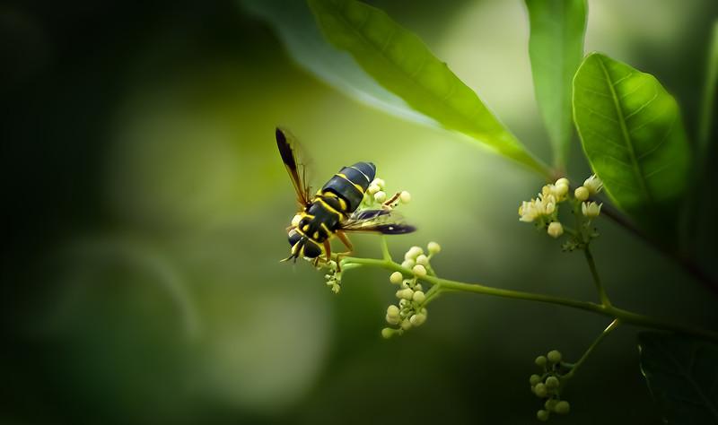 Bugs and Beetles - 39.jpg
