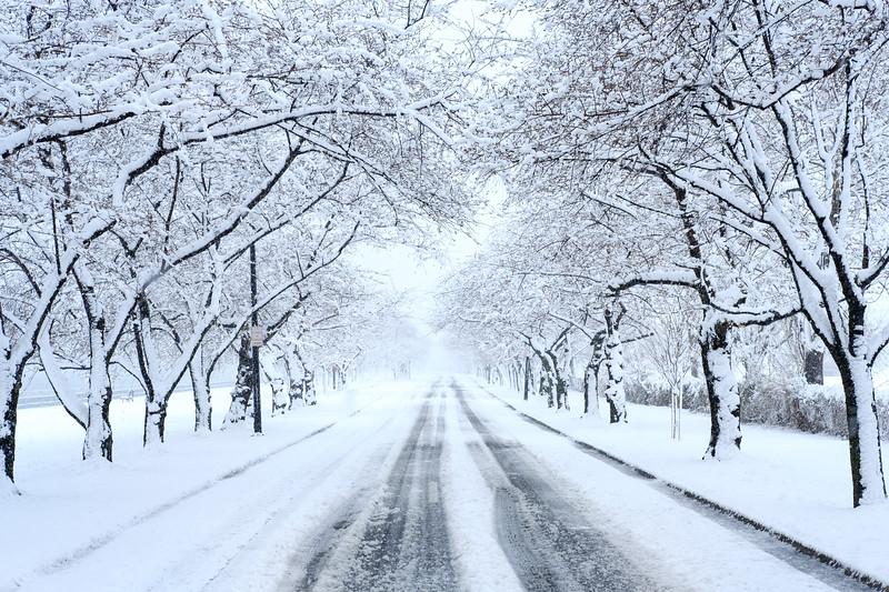 Snow Day-1.jpg