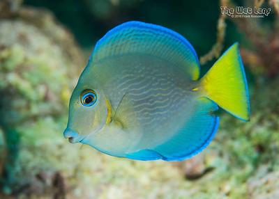 TWA Fish