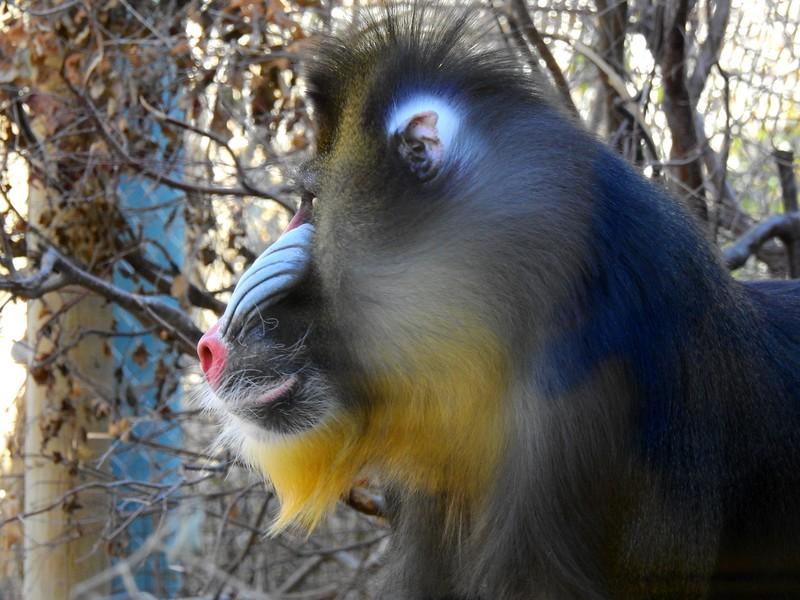 Denver Zoo 2018 (2619).JPG