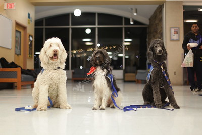 30412 Therapy Dogs at Bennett Tower