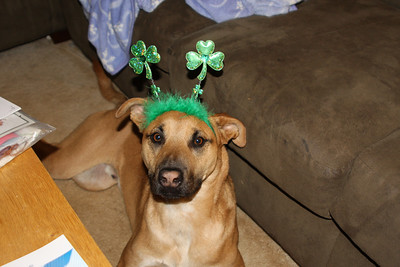 St. Patricks Day Doggies
