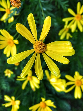 Spring Flowers in Sonoma