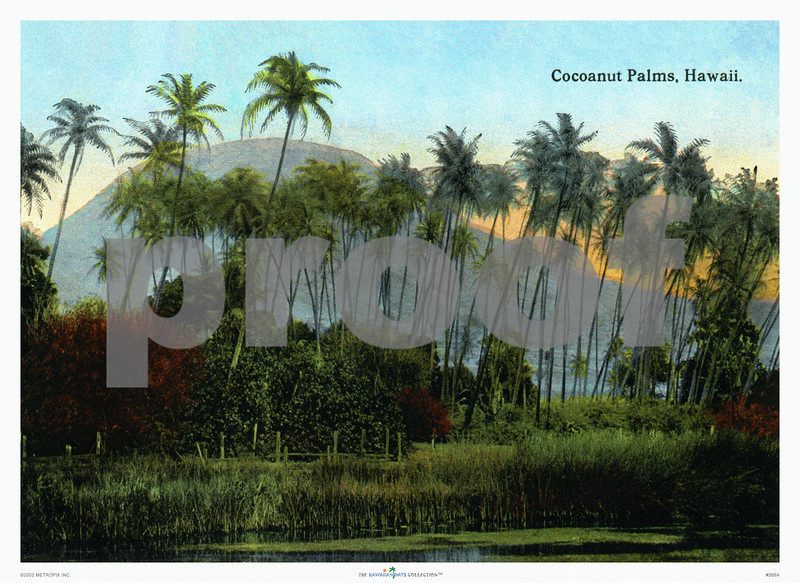 268: 'Cocoanut Palms, Hawaii' Postcard, ca 1926. (PROOF watermark will not appear on your print)