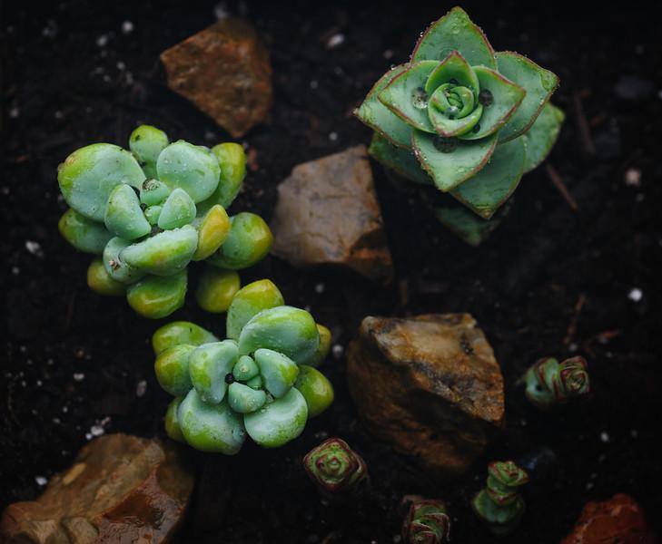 Succulent-5426.jpg