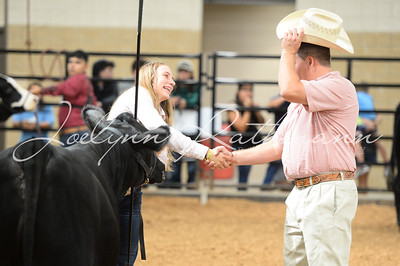 Scramble Heifer Show