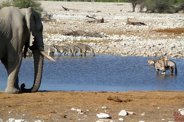 Waterholes: wildlife meeting point 2