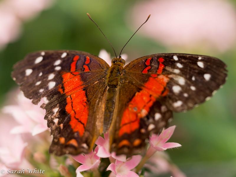 140503_ButterflyHouse_385.jpg