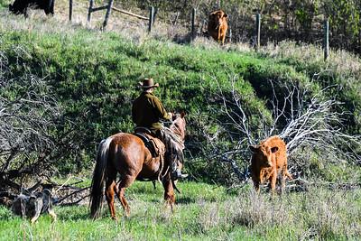 Bar S Ranch
