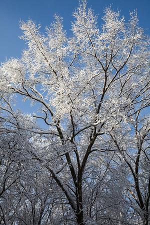 2016 Winter