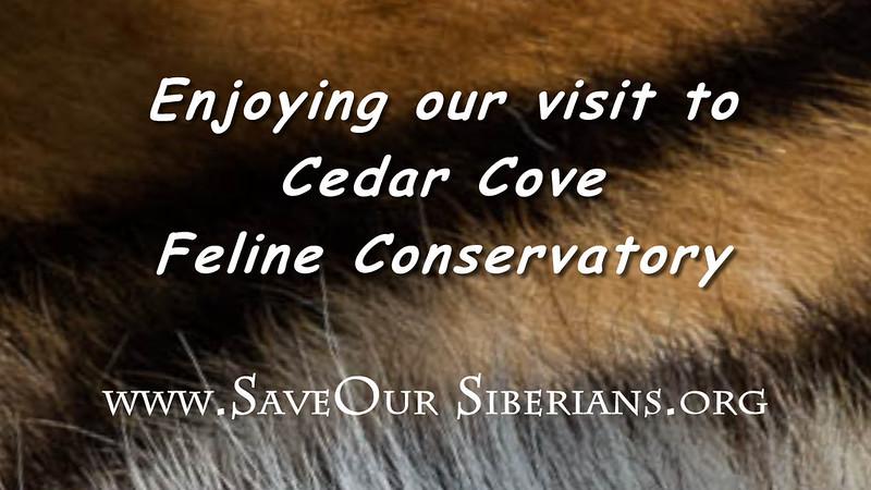 Cedar Cove (2).mp4
