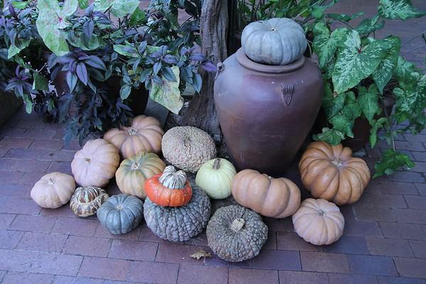 Arboretum Autumn 2010 Originals