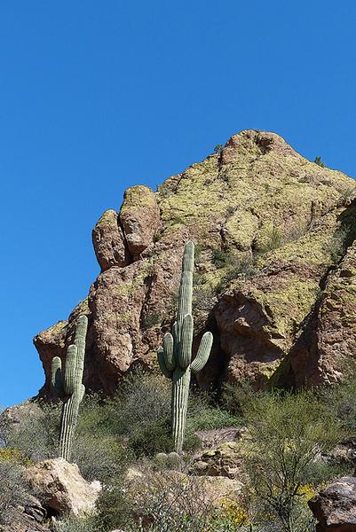 The Greening of Arizona
