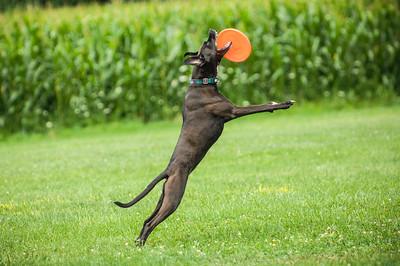 Frisbee 2017