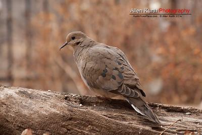 March 28 - Backyard Birds