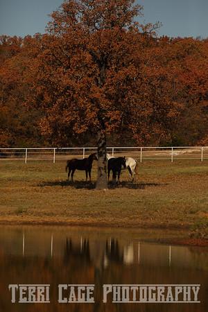 Clare Morrow Sport Horses Fall 2010