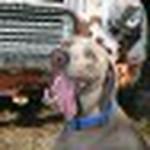 farley pups 210-2 (1).jpg