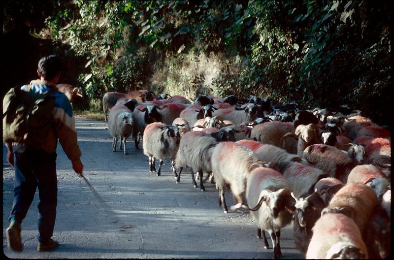 Nepal1_043.jpg