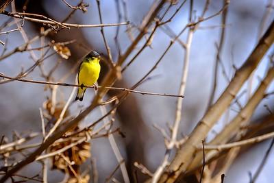 Paton Center for Hummingbirds Feb 2020