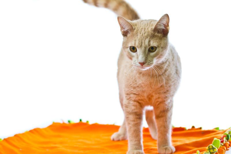 1202_Cats_194.jpg