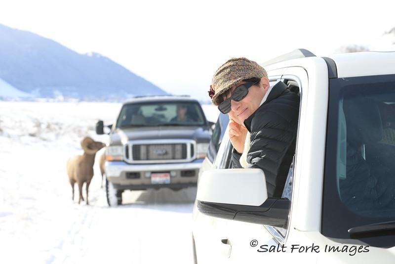 Jill at the Carwash  - Bighorn Sheep at the National Elk Refuge - Jackson Hole, Wyoming