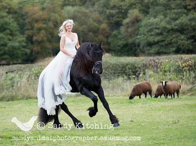 Love The Wedding Dress with Friesian stallion Oct 2015