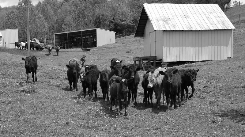 Greeneville Tenn Presley Farm April 2016_4 BW.jpg
