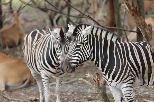 Melbourne Safari - Werribee Nature Preserve
