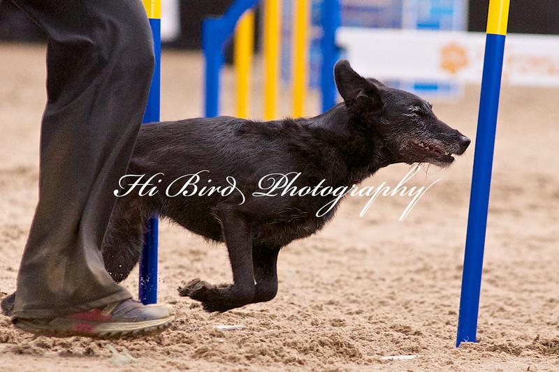 Large dog jumping  1101.jpg