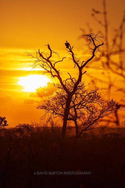 Sabi_SunsetVulture_1377cc3fx-web.jpg