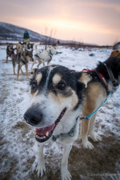 Dog Mushing-9860.jpg