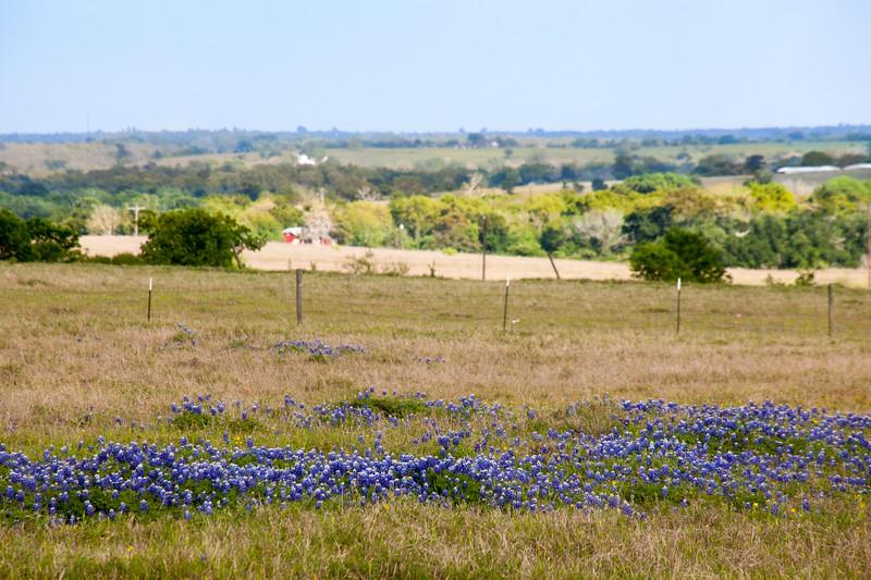 2016_4_9 Texas Wildflower Shoot-8753.jpg