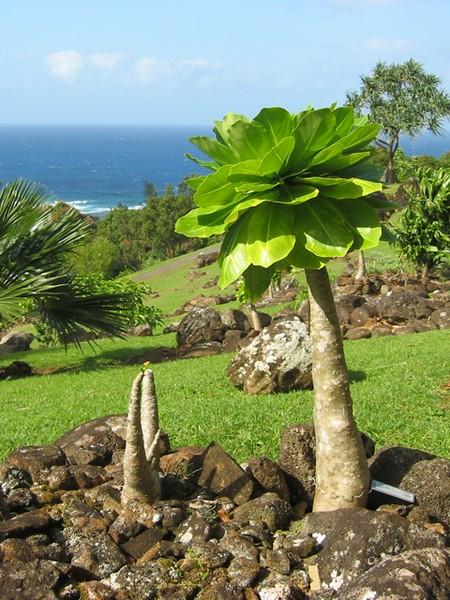 Kauai5.JPG