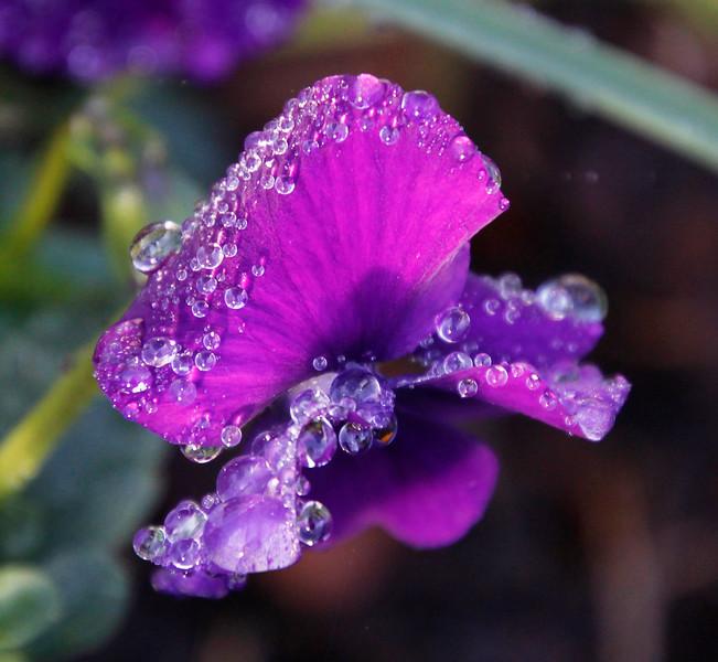 Beads of dew