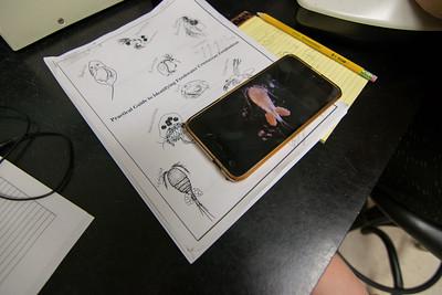 6.6-Ishita, Pam zooplankton