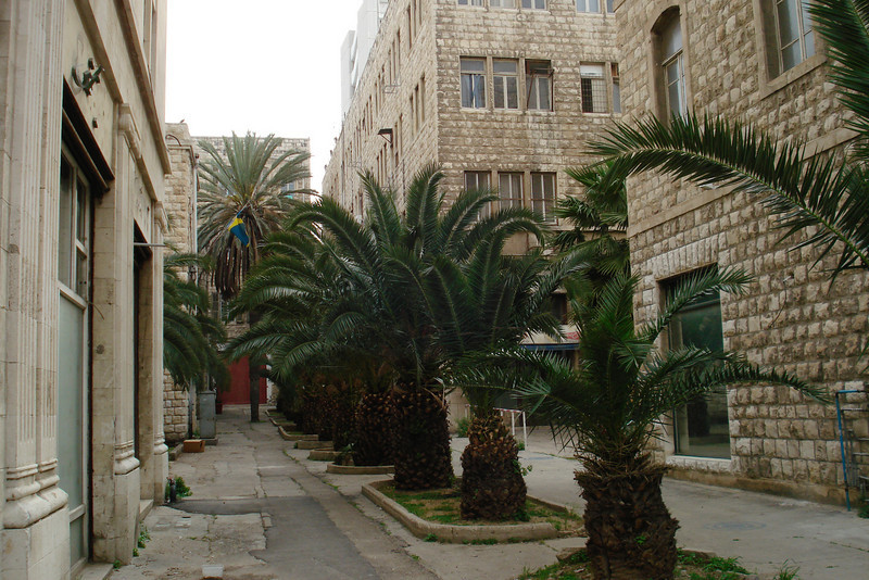 H-Palm Lined Alley .jpg