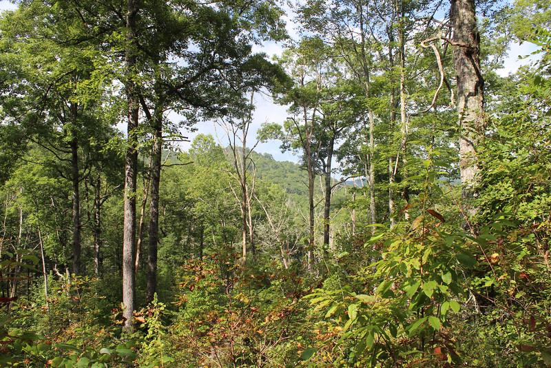 Buck Creek 066.jpg