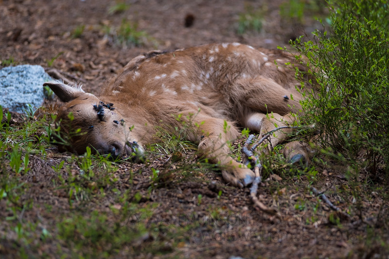 Jay Waltmunson Photography - Wallowa Llamas Reunion - 130.jpg
